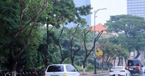 Cây xanh ở Đà Nẵng bị cắt cụt ngọn