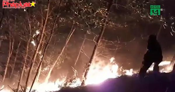 Bị khởi tố vì vô tình gây cháy hơn 100ha rừng