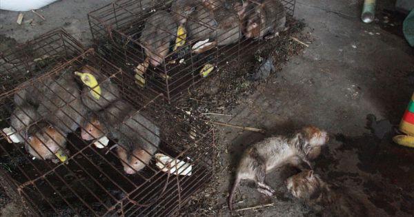 Ai chịu trách nhiệm khi thú rừng chết dần trong nhà kho hải quan?