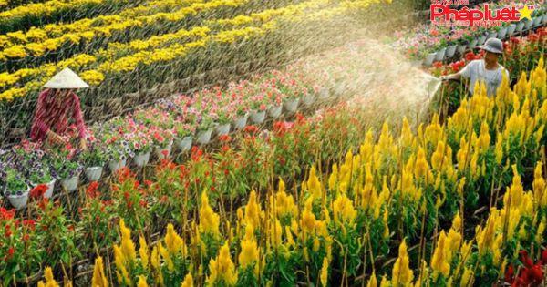 Ngừng thu phí khách tham quan làng hoa Sa Đéc