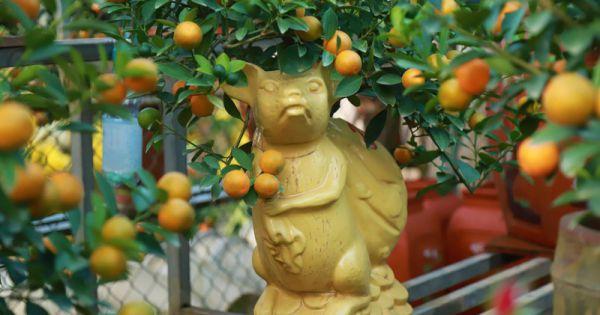 """Độc đáo """"chuột cõng quất bonsai""""giá cả triệu mỗi cây, hút khách dịp Tết Canh Tý"""