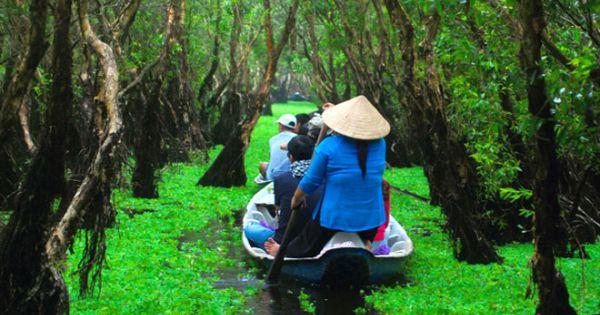 Rừng tràm Trà Sư nhận kỷ lục khu rừng tràm đẹp nhất Việt Nam