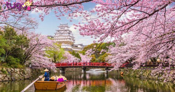 """Du lịch Nhật Bản với chiến dịch """"Your Japan 2020"""""""