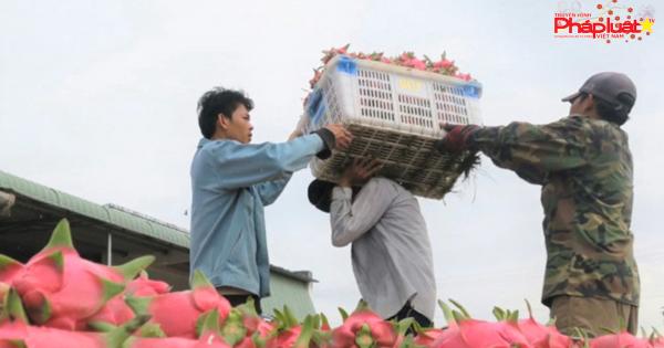 Nông sản Việt nhắm tới thị trường Ấn Độ thay Trung Quốc