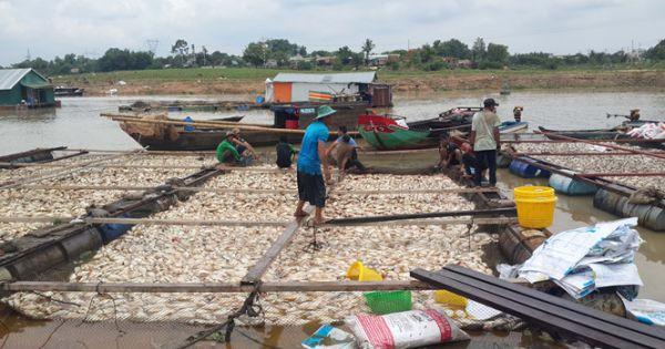 Di dời 168 hộ nuôi cá bè trên sông La Ngà