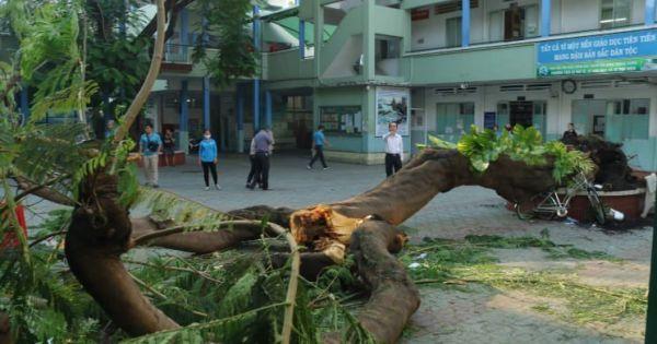 TP.HCM: Cây đổ, đè 13 học sinh