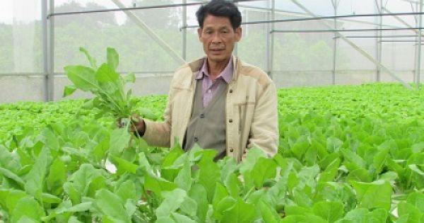 Đà Nẵng kêu gọi đầu tư vào các dự án nông nghiệp