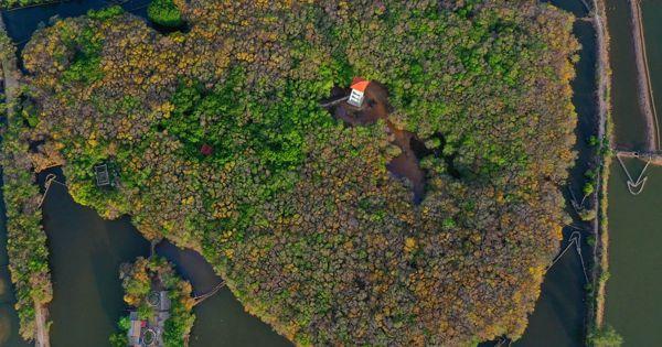 Chính thức thành lập Khu bảo tồn thiên nhiên Tam Giang - Cầu Hai