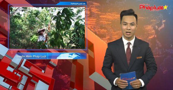 Bản tin Pháp luật: Công ty Cổ phần Văn Tuân có dấu hiệu vi phạm quản lý đất rừng đặc dụng Hạ Long