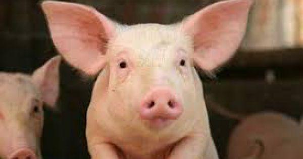 Hơn 54% mẫu thịt lợn, gà tại Hà Nội, Hà Nam nhiễm vi sinh vật