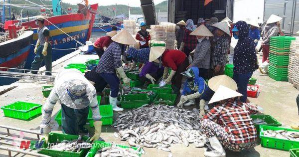 Ứ đọng hàng nghìn tấn hải sản trong kho đông lạnh do không xuất khẩu được tại Nghệ An
