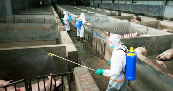 Phòng chống dịch bệnh vật nuôi sau nước rút