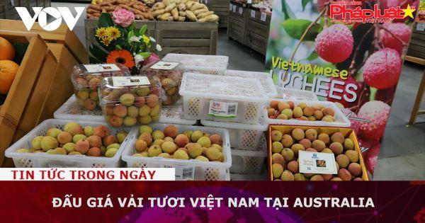 Đấu giá vải tươi Việt Nam tại Australia