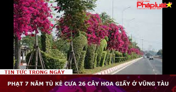 Phạt 7 năm tù kẻ cưa 26 cây hoa giấy ở Vũng Tàu