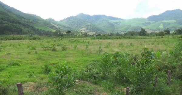 Nghệ An: Dự án bỏ hoang, người dân lấn chiếm đất trồng rừng
