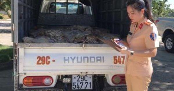 Tạm giữ xe ô tô vận chuyển 1 tấn bì lợn bốc mùi hôi thối