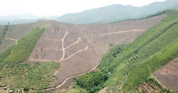 Vụ tàn phá rừng phòng hộ: UBND tỉnh Quảng Ninh vào cuộc
