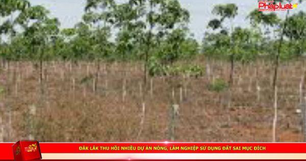 Đắk Lắk thu hồi nhiều dự án nông, lâm nghiệp sử dụng đất sai mục đích