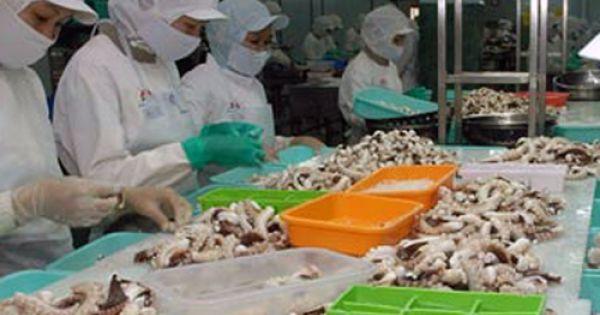 Điểm báo 04/09/2018: Xuất khẩu bạch tuộc sang các thị trường lớn đều giảm