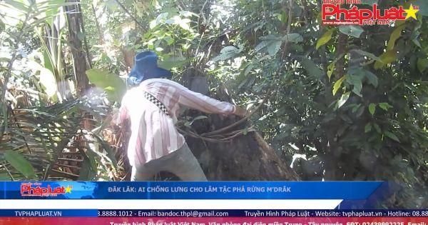 Đắk Lắk: Ai chống lưng cho lâm tặc phá rừng M'Drắk?