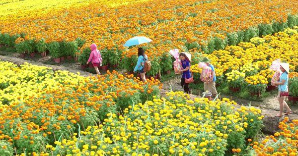 3 triệu giỏ hoa Sa Đéc chờ Tết, tăng 1 triệu so với năm trước