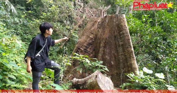 Quảng Nam: Rừng nguyên sinh đang bị bức tử