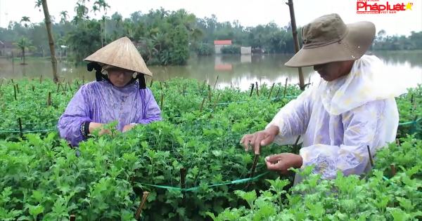 Quảng Ngãi: Dân vùng lũ thấp thỏm vụ hoa Tết