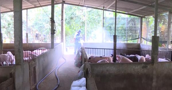 Quảng Ngãi: Dịch cúm gia cầm tái phát mùa lũ, tăng cường các biện pháp phòng chống