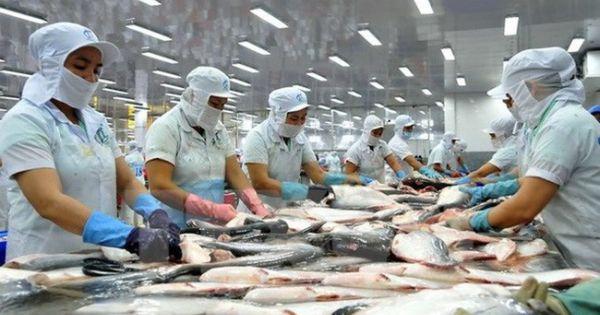 Mỹ trở lại dẫn đầu thị trường nhập khẩu cá tra Việt Nam