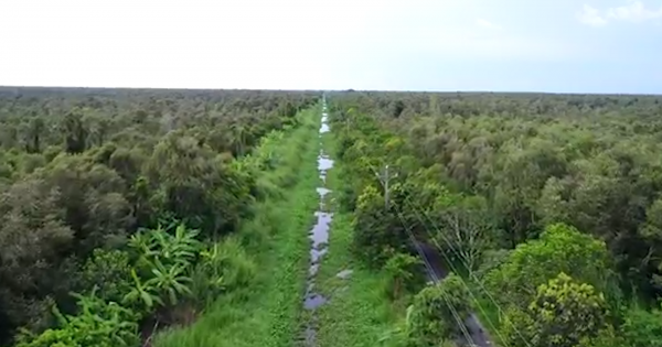 Nhiều đơn vị không trồng lại rừng sau khai thác với diện tích gần 700 ha