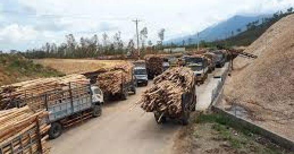 Nhà máy gỗ dăm hoạt động không phép, băm nát đường giao thông