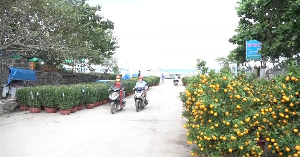 Đảo Lý Sơn tràn ngập sắc hoa xuân