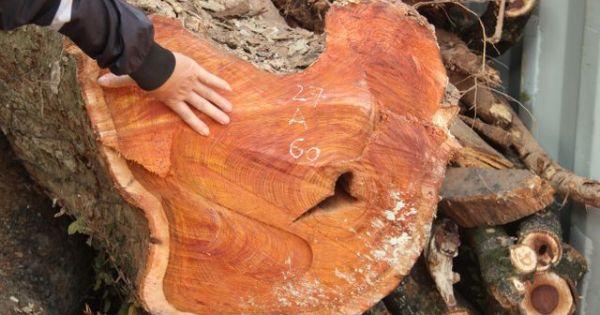 Dân quây rào B40 bảo vệ container chứa gỗ sưa trăm tỷ đồng