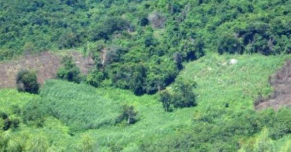 """Quảng Nam: Khu nghỉ dưỡng """"chui"""" trong rừng phòng hộ"""