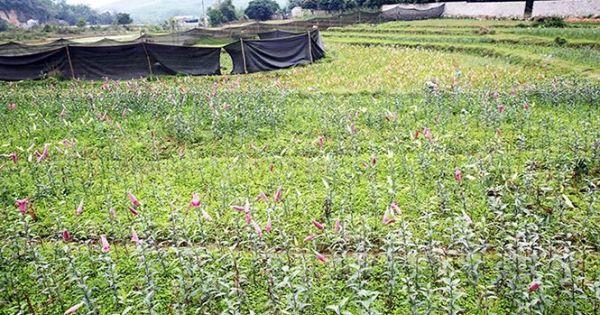 Hoành Bồ, Quảng Ninh: Thất thoát tiền tỷ, hàng loạt cán bộ bị kỷ luật