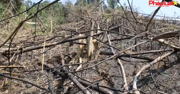 Điều tra vụ phá rừng có Phó Chủ tịch UBND xã tham gia ở Nghệ An