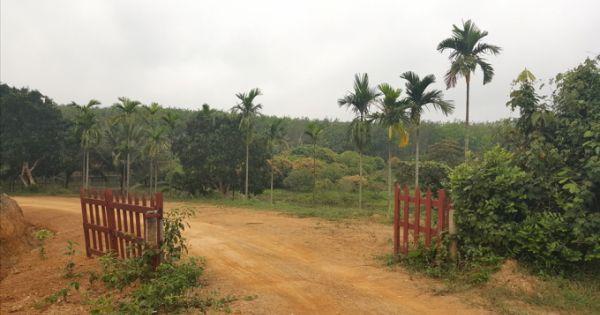 Quảng Trị: Giám đốc công ty lâm nghiệp lấn chiếm đất rừng